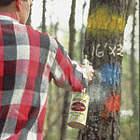 Tree Marking and Boundary Marking